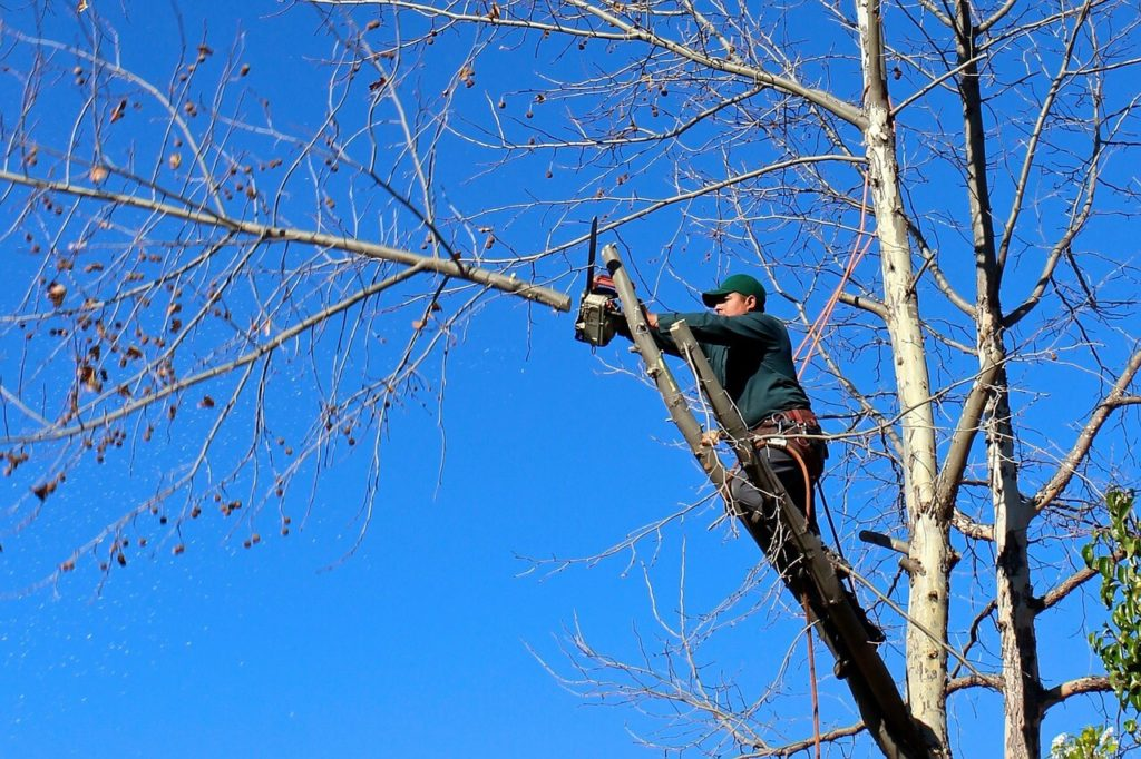 Contact Us-Plant City FL Tree Trimming and Stump Grinding Services-We Offer Tree Trimming Services, Tree Removal, Tree Pruning, Tree Cutting, Residential and Commercial Tree Trimming Services, Storm Damage, Emergency Tree Removal, Land Clearing, Tree Companies, Tree Care Service, Stump Grinding, and we're the Best Tree Trimming Company Near You Guaranteed!
