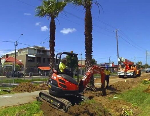Palm Tree Removal-Plant City FL Tree Trimming and Stump Grinding Services-We Offer Tree Trimming Services, Tree Removal, Tree Pruning, Tree Cutting, Residential and Commercial Tree Trimming Services, Storm Damage, Emergency Tree Removal, Land Clearing, Tree Companies, Tree Care Service, Stump Grinding, and we're the Best Tree Trimming Company Near You Guaranteed!