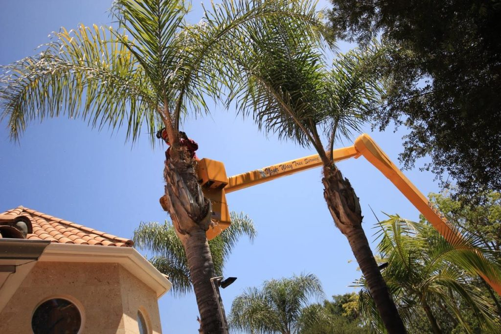 Palm Tree Trimming-Plant City FL Tree Trimming and Stump Grinding Services-We Offer Tree Trimming Services, Tree Removal, Tree Pruning, Tree Cutting, Residential and Commercial Tree Trimming Services, Storm Damage, Emergency Tree Removal, Land Clearing, Tree Companies, Tree Care Service, Stump Grinding, and we're the Best Tree Trimming Company Near You Guaranteed!