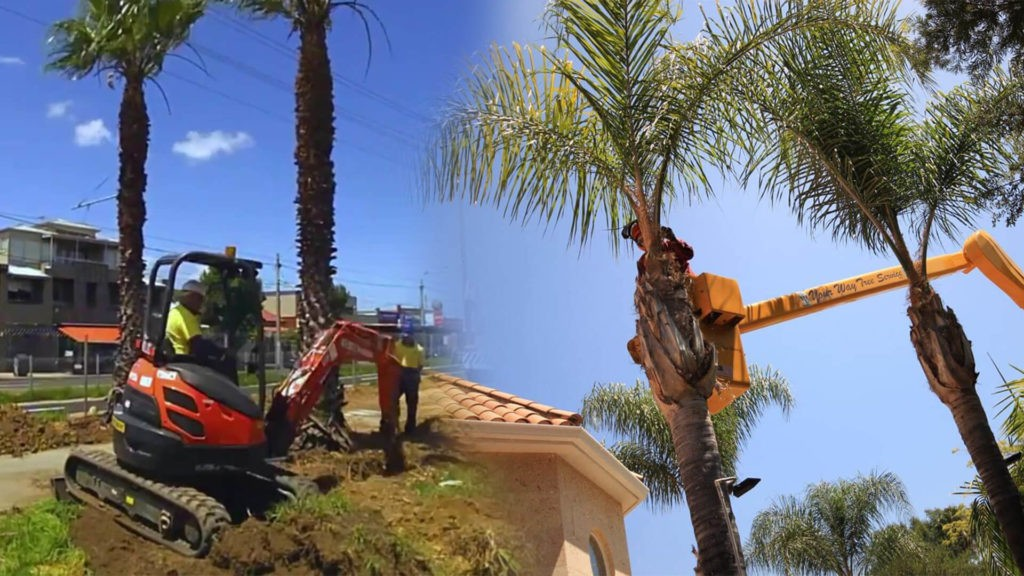 Palm tree trimming & palm tree removal-Plant City FL Tree Trimming and Stump Grinding Services-We Offer Tree Trimming Services, Tree Removal, Tree Pruning, Tree Cutting, Residential and Commercial Tree Trimming Services, Storm Damage, Emergency Tree Removal, Land Clearing, Tree Companies, Tree Care Service, Stump Grinding, and we're the Best Tree Trimming Company Near You Guaranteed!