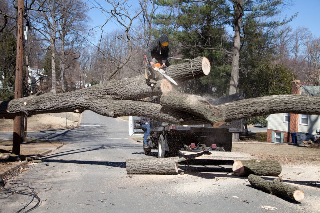 Residential Tree Services-Plant City FL Tree Trimming and Stump Grinding Services-We Offer Tree Trimming Services, Tree Removal, Tree Pruning, Tree Cutting, Residential and Commercial Tree Trimming Services, Storm Damage, Emergency Tree Removal, Land Clearing, Tree Companies, Tree Care Service, Stump Grinding, and we're the Best Tree Trimming Company Near You Guaranteed!