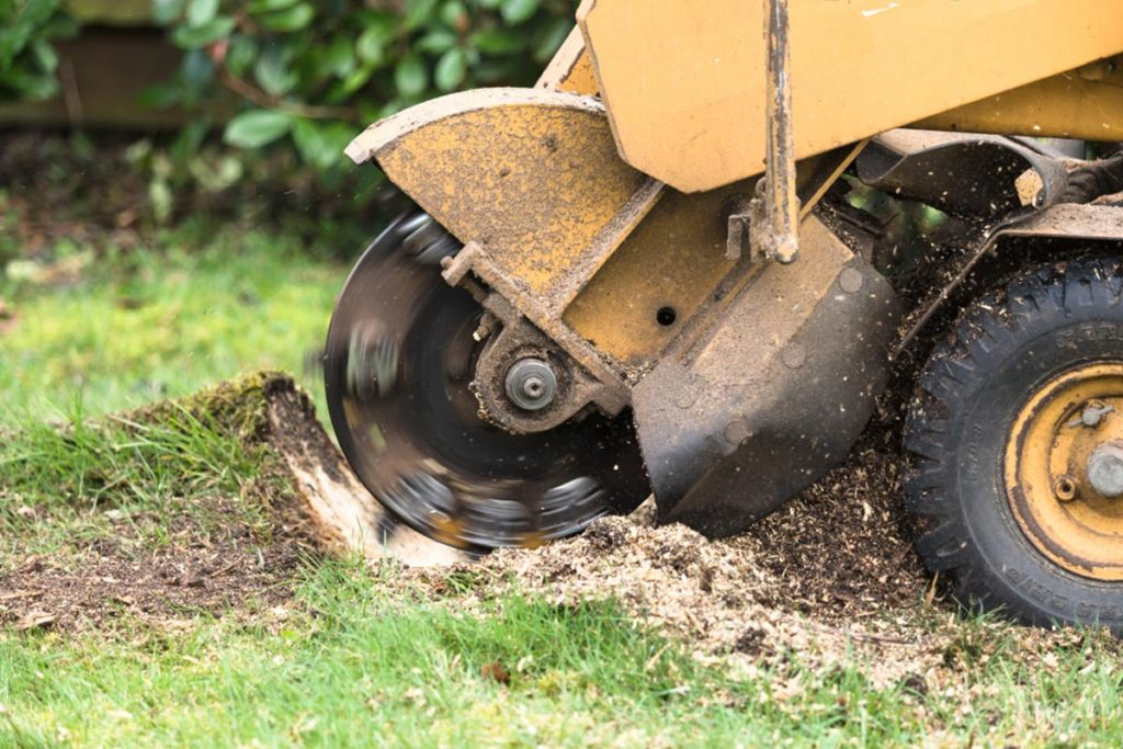 Stump Grinding-Plant City FL Tree Trimming and Stump Grinding Services-We Offer Tree Trimming Services, Tree Removal, Tree Pruning, Tree Cutting, Residential and Commercial Tree Trimming Services, Storm Damage, Emergency Tree Removal, Land Clearing, Tree Companies, Tree Care Service, Stump Grinding, and we're the Best Tree Trimming Company Near You Guaranteed!