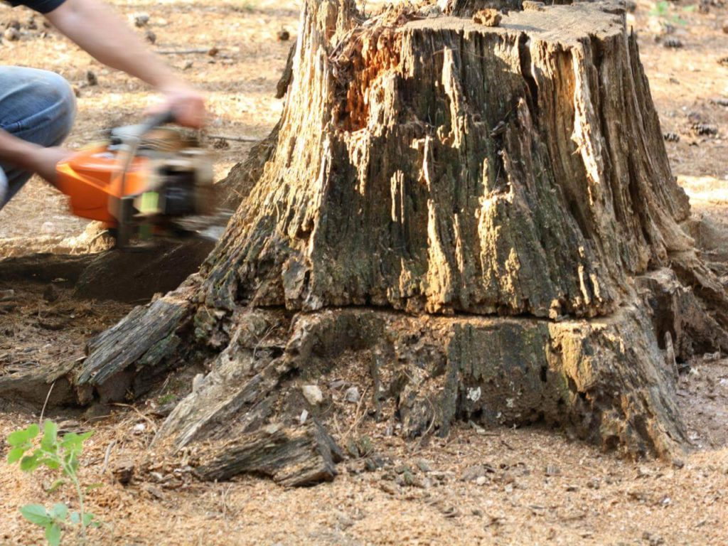 Stump Removal-Plant City FL Tree Trimming and Stump Grinding Services-We Offer Tree Trimming Services, Tree Removal, Tree Pruning, Tree Cutting, Residential and Commercial Tree Trimming Services, Storm Damage, Emergency Tree Removal, Land Clearing, Tree Companies, Tree Care Service, Stump Grinding, and we're the Best Tree Trimming Company Near You Guaranteed!
