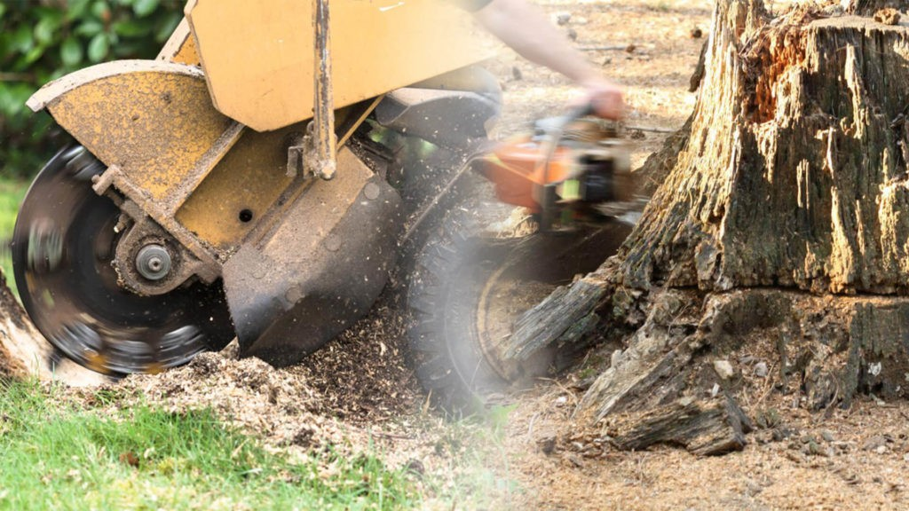 Stump grinding & removal-Plant City FL Tree Trimming and Stump Grinding Services-We Offer Tree Trimming Services, Tree Removal, Tree Pruning, Tree Cutting, Residential and Commercial Tree Trimming Services, Storm Damage, Emergency Tree Removal, Land Clearing, Tree Companies, Tree Care Service, Stump Grinding, and we're the Best Tree Trimming Company Near You Guaranteed!