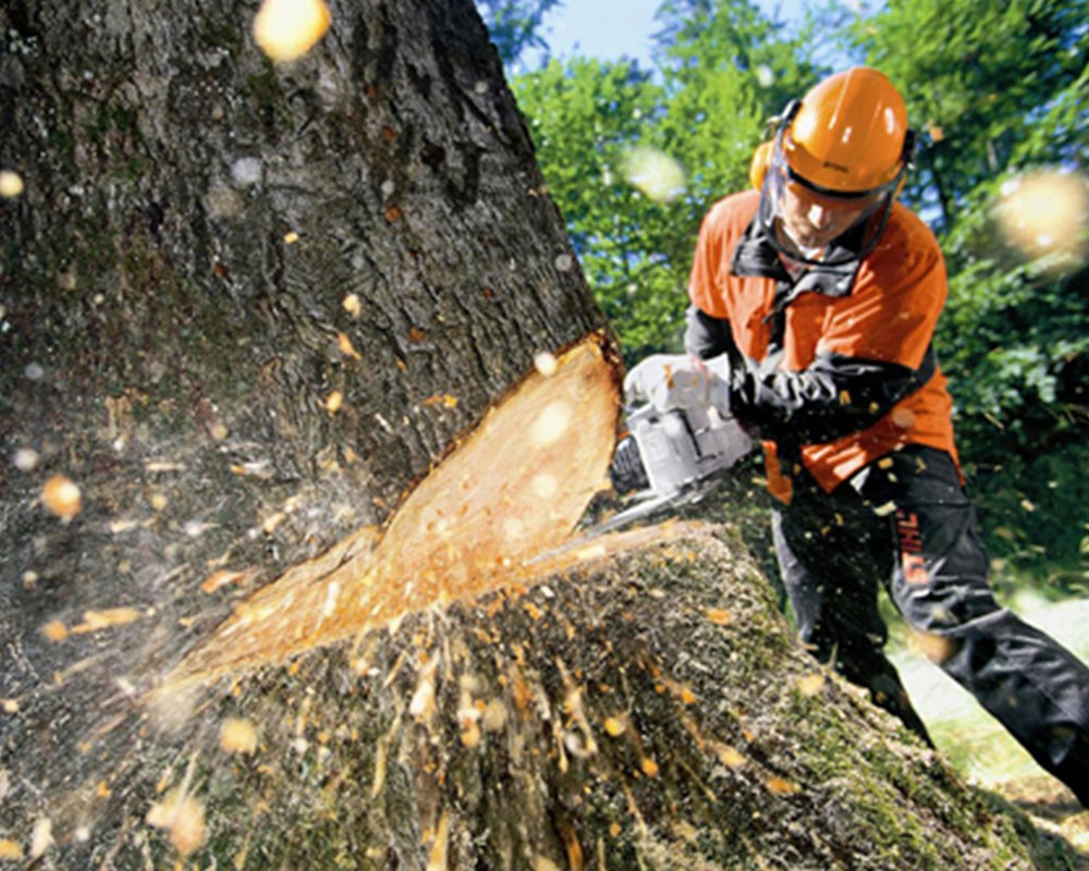 Tree Cutting-Plant City FL Tree Trimming and Stump Grinding Services-We Offer Tree Trimming Services, Tree Removal, Tree Pruning, Tree Cutting, Residential and Commercial Tree Trimming Services, Storm Damage, Emergency Tree Removal, Land Clearing, Tree Companies, Tree Care Service, Stump Grinding, and we're the Best Tree Trimming Company Near You Guaranteed!