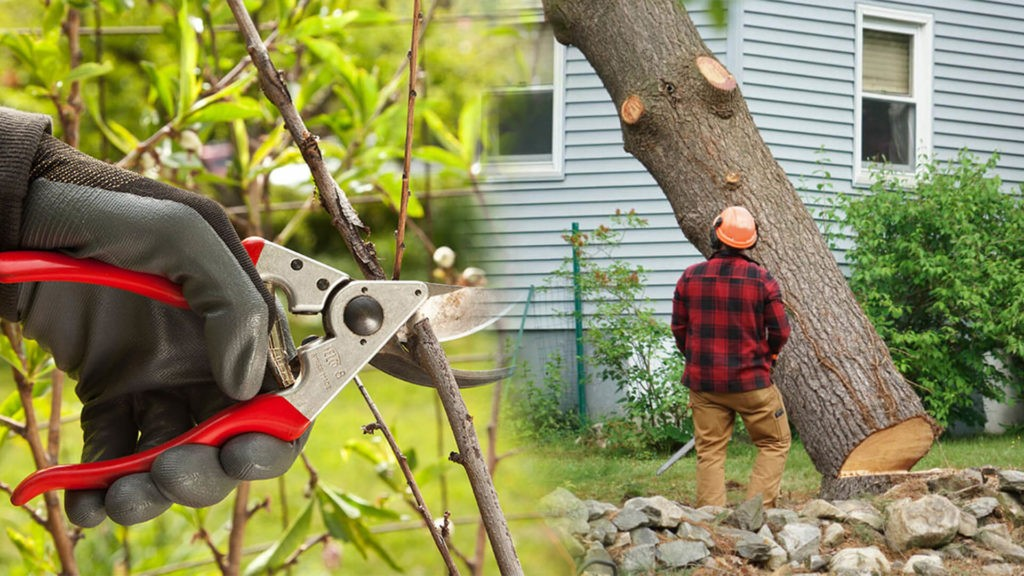 Tree pruning & tree removal-Plant City FL Tree Trimming and Stump Grinding Services-We Offer Tree Trimming Services, Tree Removal, Tree Pruning, Tree Cutting, Residential and Commercial Tree Trimming Services, Storm Damage, Emergency Tree Removal, Land Clearing, Tree Companies, Tree Care Service, Stump Grinding, and we're the Best Tree Trimming Company Near You Guaranteed!